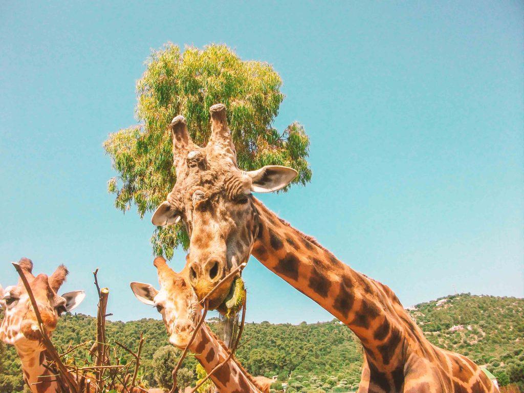 Zoo Safari di Fasano con i bambini | Ricette di Viaggio